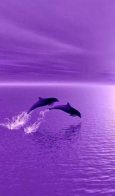 I 💜 U, cos you're PURPLE. Dolphins surfing in purple sunset! Purple Sunset, Purple Love, All Things Purple, Shades Of Purple, Light Purple, Dark Purple Aesthetic, Violet Aesthetic, Lavender Aesthetic, Purple Aesthetic Background