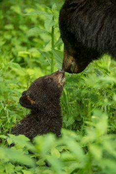Mom and cub. #bears #family