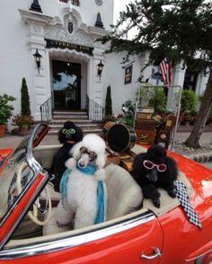 12 Pet-Friendly Destination Hotels     Luxury Pet Travel