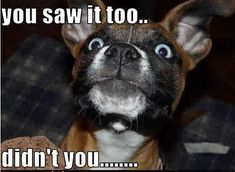 Cute Animals with Captions | ... : Animals + captions = Awws and lols (28 photos) » cute-captions-5