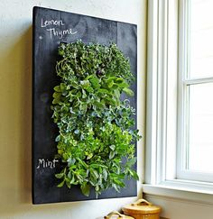 Shop chalkboard wall planter from Williams Sonoma. Our expertly crafted collections offer a wide of range of cooking tools and kitchen appliances, including a variety of chalkboard wall planter. Living Wall Planter, Vertical Wall Planters, Patio Wall, Decorative Planters, Hanging Planters, Vertical Green Wall, Porch Wall, Diy Patio, Herb Wall