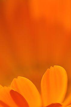 background background orange Erica G. Orange Aesthetic, Aesthetic Colors, Cabelo Jennifer Lawrence, Orange Flowers, Orange Color, Fuerza Natural, Channel Orange, Orange Wallpaper, Orange You Glad