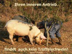 Ihren inneren Antrieb findet auch kein Trüffelschwein!