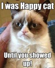 Grumpy cat, grumpy cat meme, grumpy cat humor, grumpy cat quotes, grumpy cat funny …For the best humour and hilarious jokes visit cat Grumpy Cat Quotes, Meme Grumpy Cat, Gato Grumpy, Grumpy Kitty, Funny Cats, Funny Animals, Cute Animals, Funniest Animals, Hilarious Stuff