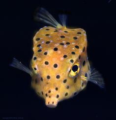 1000+ images about Under the Sea on Pinterest Under the sea ...