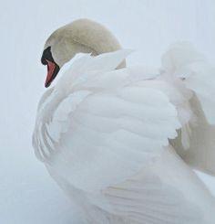 casuarius:  snow angel (by lightloverLori)