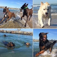 dogbeachreviews Let's go to the beach with @adognamedbronson ! Follow @dogbeachreviews to find great dog beaches. Win free BarkBoxes for your pup [link in bio] - - - http://dogbeachreviews.com - - - #dog #dogs #dogstagram #dogsofinstaworld #dogsofinsta #puppylove #puppiesofinstagram #puppies #pup #dogbeach #dogpark #dogmom #doglife #doglove #doggie #dogslife #doglover #dogsofig #dogsofinsta #reviews #ratings #review #california #californialove #beach #beachlife #beaches #beachfun