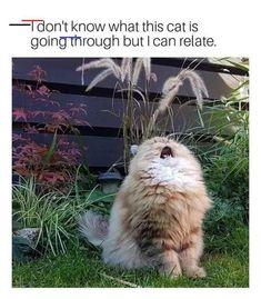 hilarious animals Lustigsten Tier Memes lustigsten TIERE Hunde Source by slweedman Funny Animal Memes, Cute Funny Animals, Funny Relatable Memes, Funny Animal Pictures, Cute Baby Animals, Funny Cute, Cute Cats, Funniest Animals, Funny Posts