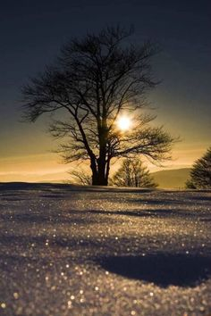 Winter tree sunflare and snowy sparkle. Nature Landscape, Winter Landscape, I Love Winter, Winter Wonder, Winter Light, Winter Scenery, Winter Trees, Cool Pictures, Beautiful Pictures