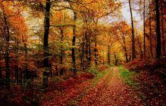 Die Sonne ist jetzt zwar weg, ... bin aber im Wald geblieben. Hab ihn nur gewechselt. Jetzt auf der anderen Seite von Mondorf. Richtung Hilbringen im Seiterter Wald. :-)