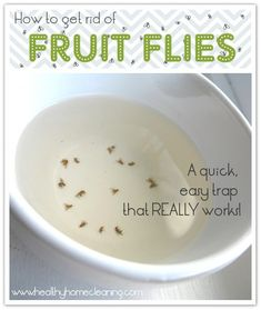 How to get rid of fruit flies easily and effectively. This totally works! Within… How to get rid of fruit flies easily and effectively. This totally works! Within the first half hour I had already caught Fruit Flies In House, How To Get Rid Of Gnats, Grand Menage, Limpieza Natural, Mosquitos, Cleaners Homemade, Diy Cleaners, Kitchen Cleaners, Tips & Tricks