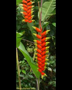 Amazon Rainforest Plants And Flowers What Colour Is The