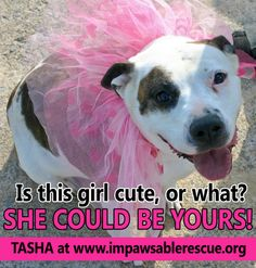 Mommy Will Need a Home - Please Share