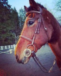 I love her #horse #horses #horsesofinstagram #horseoftheday...