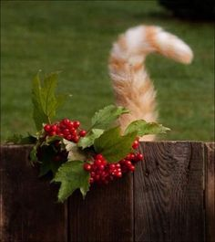 PetsLady's Pick: Cute Christmas Cat Tail Of The Day...see more at PetsLady.com -The FUN site for Animal Lovers