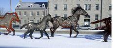 maryhardingjewelry bead blog: A Herd Of Wild Horses in the City