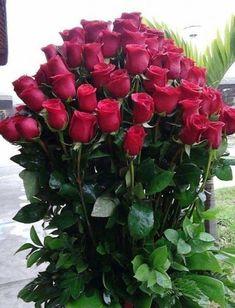 Beautiful Rose Flowers, Wonderful Flowers, Good Morning Flowers, Beautiful Flower Arrangements, Floral Arrangements, Beautiful Flowers, Love Rose Flower, Flower Pots, Red Rose Bouquet