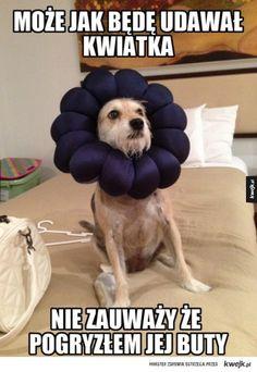 #kwejk #humor #piesel