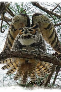 Amazing Owl Photo: Animals, Nature, Owl Photo, Beautiful Birds, Owls by echkbet Owl Photos, Owl Pictures, Beautiful Owl, Animals Beautiful, Pretty Birds, Love Birds, Animals And Pets, Cute Animals, Nature Animals
