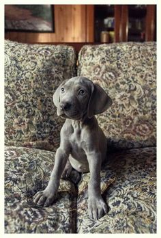 Pup=))