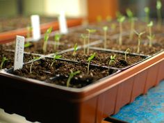 How to start seeds indoors | Sunset