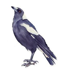 Australian Magpie watercolour print by Ramona Frederickson
