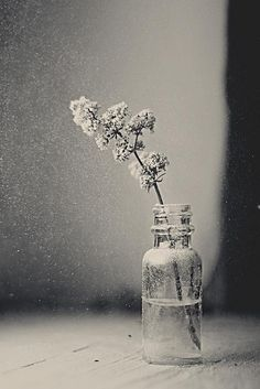 * - ♂ StillLife + Ikebana - Still Still Life Photography, Fine Art Photography, Portrait Photography, Still Life Photos, Still Life Art, Black And White Portraits, Black And White Photography, Ikebana, Atelier Photo