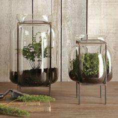 pots en verre décoratifs avec plantes