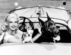 Jayne Mansfield with Chihuahua and Great Dane #dog