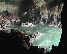 Sea Lion Caves, Oregon Coast