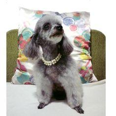 cães de luxo - Pesquisa Google