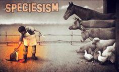 #EndSpeciesism #GoVegan