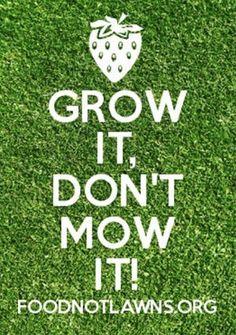 What If Every Lawn was Transformed into an Edible Garden? Herb Garden, Vegetable Garden, Detox Your Home, Butterfly Bush, Green Lawn, Lawns, Edible Garden, Garden Landscaping, Landscape