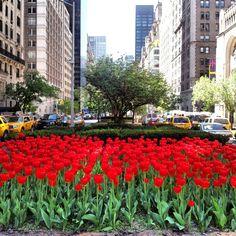 Park avenue NYC