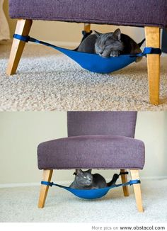 Haha space saving cat bed