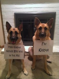 funny dog shaming, karma bites you in the butt