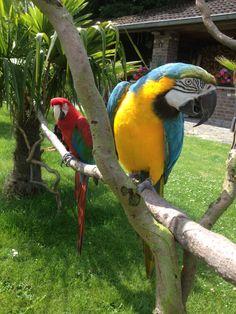 "Macaw Raki & Zizi Check the Facebook page ""Raki & Zizi"""