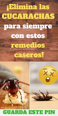110 Ideas De Cucarachas Cucarachas Insecticida Casero Insecticidas Naturales