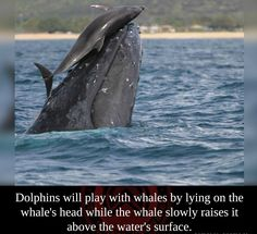 Dolphins are awesome...