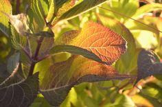 El verde naturaleza Taken by Melissa Oviedo | Flickr: Intercambio de fotos