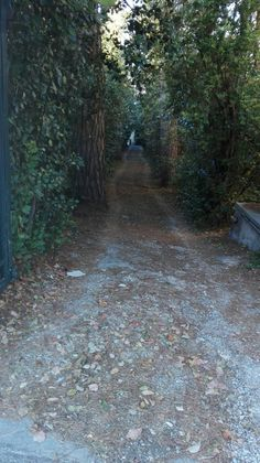 path. mjt. mytilene. greece. autumn