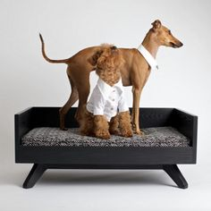 Best Pet Beds For Your Dog Or Cat That Are Cute