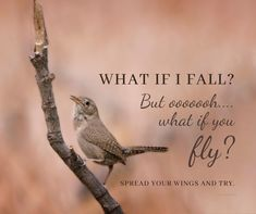 Do you know someone that needs to see this? Feel free to give it a like and then share it with them. What If You Fly, I Fall, Did You Know, Encouragement, Inspire, Feelings, Free