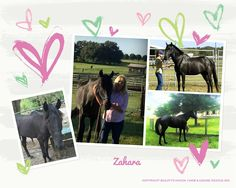 Zahara is a beautiful 7 year old TB mare that was never raced.  She's very sweet and looking for a forever home.