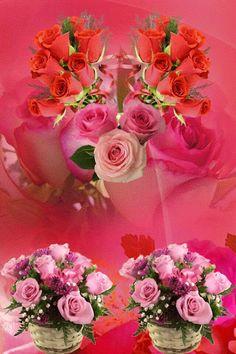 Fotografie animată Beautiful Flowers Images, Beautiful Gif, Amazing Flowers, Beautiful Roses, Pretty Flowers, Rose Images, Flower Images, Coeur Gif, Flowers Gif