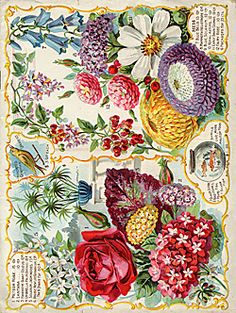 beautiful seed catalogue covers from  Smithsonian institution libraries