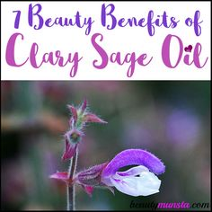 The herb clary sage has long been recognized for its medicinal qualities. Today, it's cultivated for the purpose of extracting its essential oil. And quite an amazing essential oil clary sage is! Let's discover 7 beauty benefits of clary sage essential oil in this article. Clary sage comes from the Latin word clarus meaning 'clear.' …