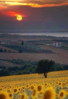 Tuscany, Italy, Val Dorcia , province of Siena. If this place is as sunflowery as it seems, I need to be there.