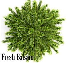 FRESH BALSAM Fragrance Oil- Merry Christmas! You will love this holiday oil! Breathe in the fresh, invigorating fragrance of snow-dusted balsam, fir trees & eucalyptus leaves. You will love theinvigorating aroma of evergreen woods on a clear, fall morning;crisp eucalyptus, fir needles and cedarwood musk notes. This oil is superstrong!  Excellent in soy and safe for bath and body 165 Degree FP Vanillin Content - 0% PHTHALATE FREE - Vegan Friend Christmas Tree Without Ornaments, Trees Top View, Tree Photoshop, Spruce Tree, Eucalyptus Leaves, Ornamental Plants, Tree Tops, Plant Design, The Fresh