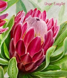 Flor Protea, Protea Art, Protea Flower, Acrylic Painting Flowers, Abstract Flowers, Watercolor Flowers, Watercolor Art, Wood Lamps, Painting Patterns